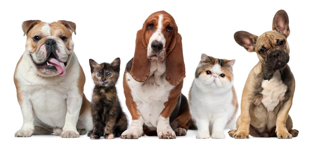 CBD pour Animaux - CBD for pets